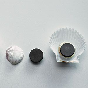 Shell Crafts | Get organized with shell magnets | AllYou.com