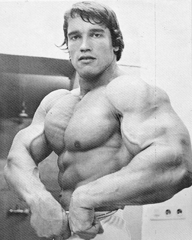 Pin by Andre on Arnold Schwarzenegger Pinterest Arnold - new arnold blueprint ebook