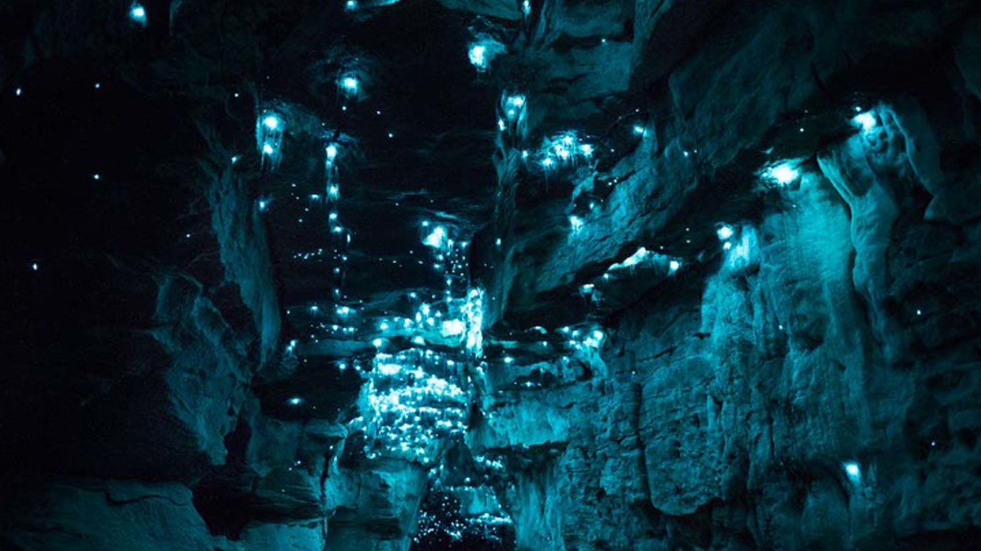 Vermes luminosos ocupam caverna da Nova Zelândia | Curiosidades do ...