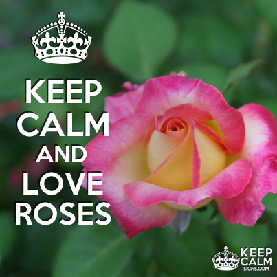 Keep Calm and love roses