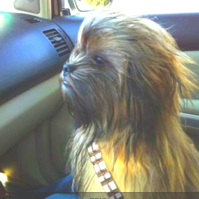 Wookie Dog Chewbacca Dog Cute Animals Animals