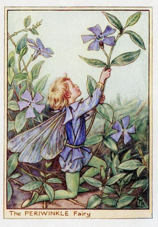 This beautifull Periwinkle Flower Fairy Vintage Print by Cicely Mary Barker