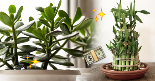 9 Plantas Para Atraer La Abundancia Suerte Y Prosperidad Plantas De Buena Suerte Planta De La Suerte Planta De La Abundancia
