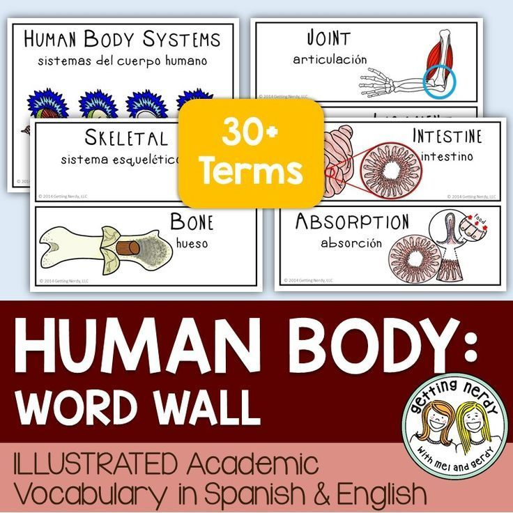 Human Body Systems - Word Wall | Getting Nerdy Science Products ...
