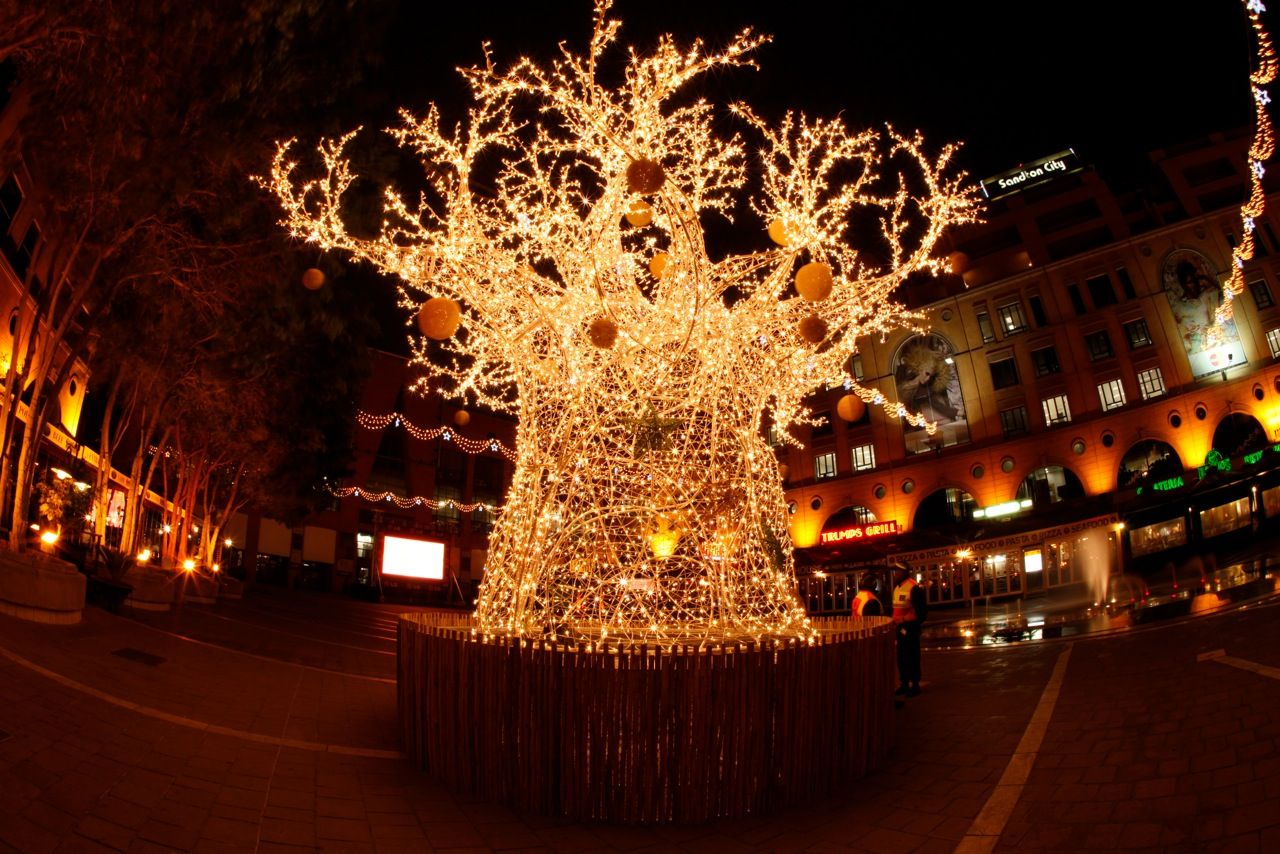 such a cool Christmas tree something South African ...