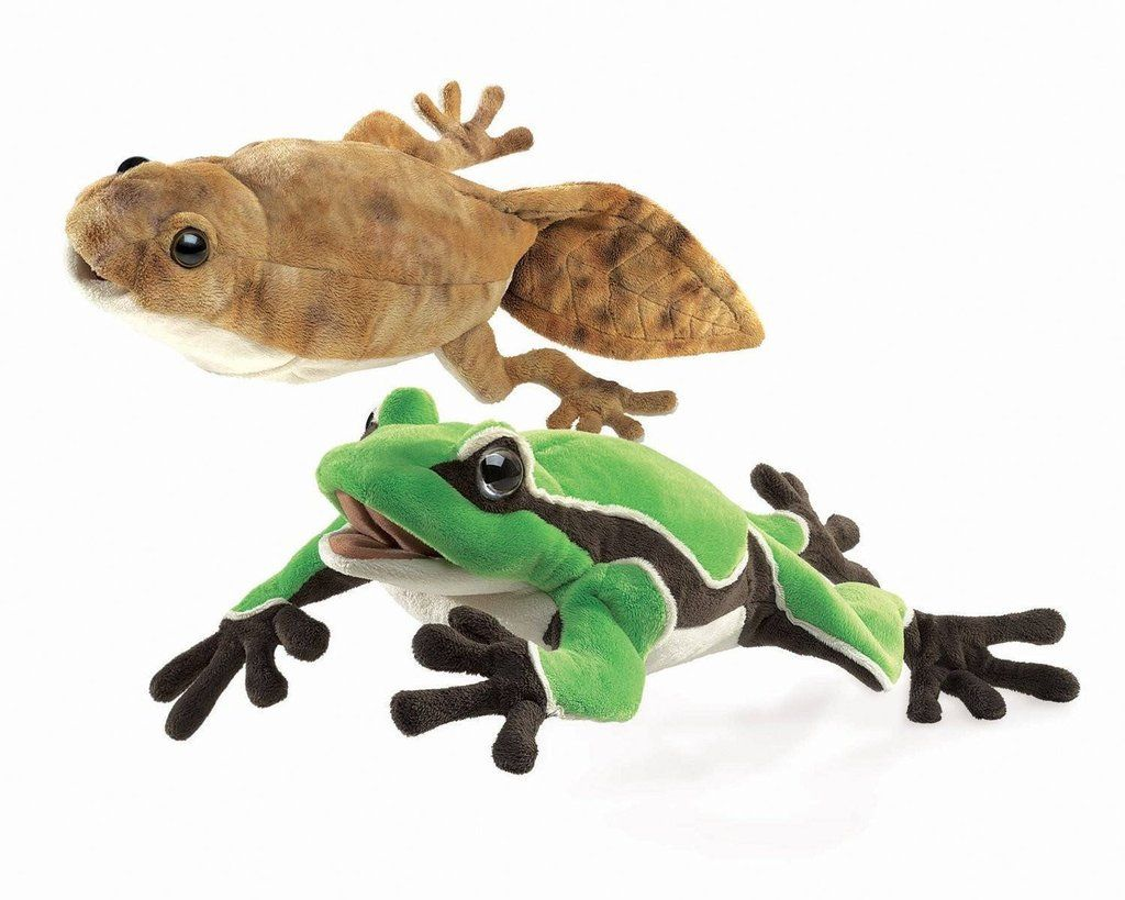 Tadpoles To Frogs