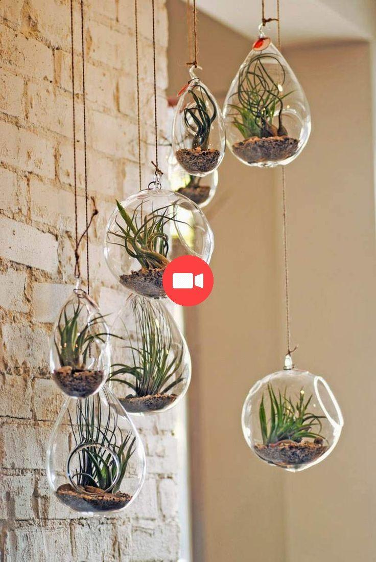 Diy déco avec des plantes succulentes en 80 photos Air