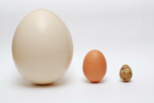 Znalezione obrazy dla zapytania jajo strusia | Jajo