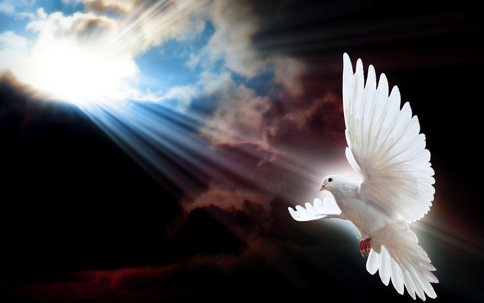 White Dove Flying To The Heavens Doves