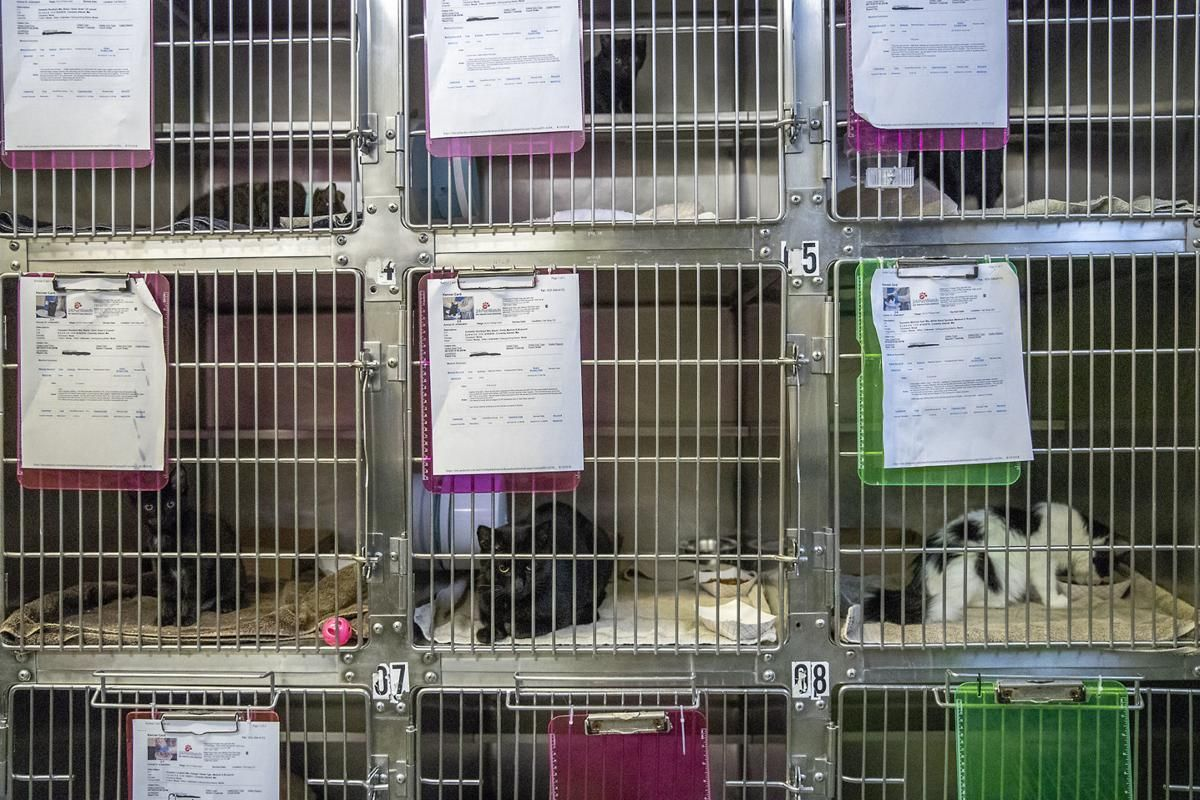 Police Raid Discovers 36 Dead Animals in a Pet Store