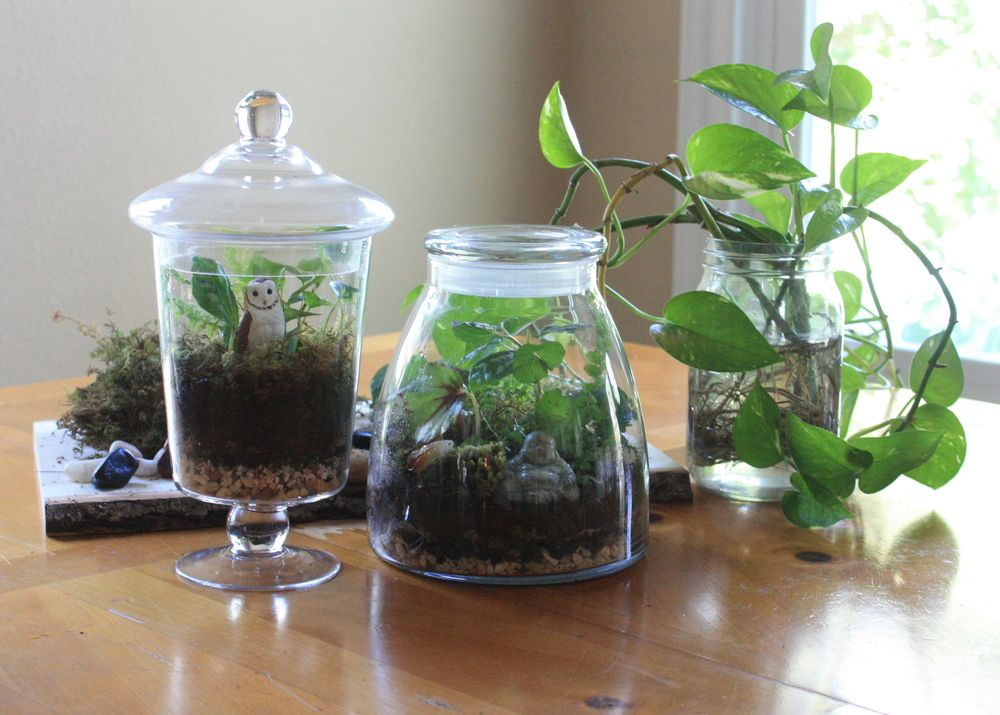 Gardening In A 'Bottle ' 8 Edible Plants You Can Grow In 640 x 480