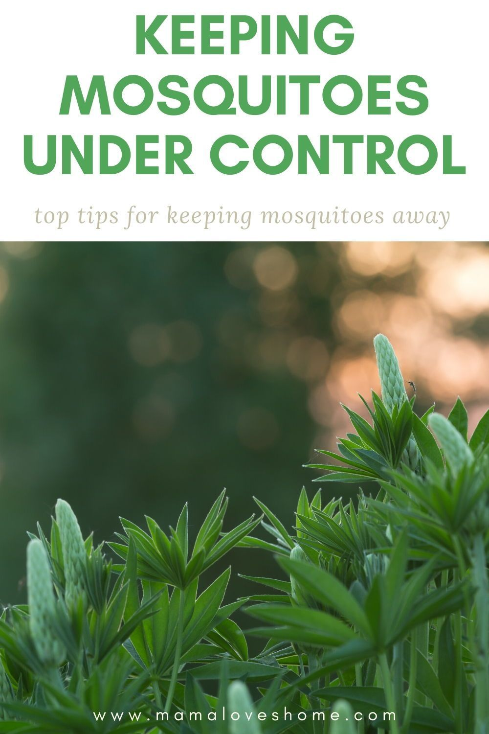 Getting rid of mosquitoes in your yard for good ...