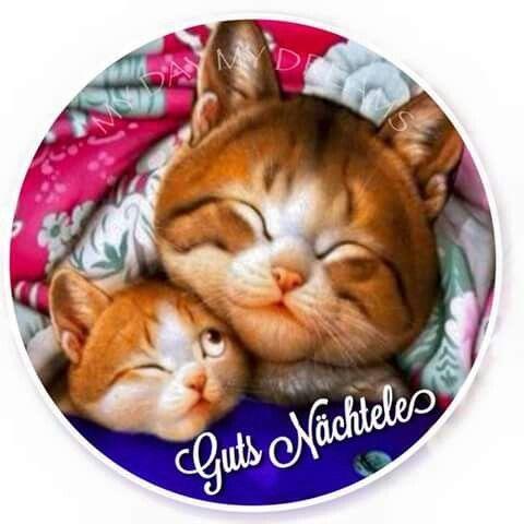 Wünsche all meinen FB Freunden auch eine Gute Nacht und süße Träume - http://guten-abend-bilder.de/wuensche-all-meinen-fb-freunden-auch-eine-gute-nacht-und-suesse-traeume-30/
