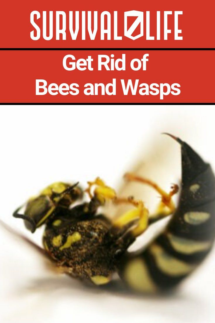 Get rid of bees and wasps getting rid of bees bees