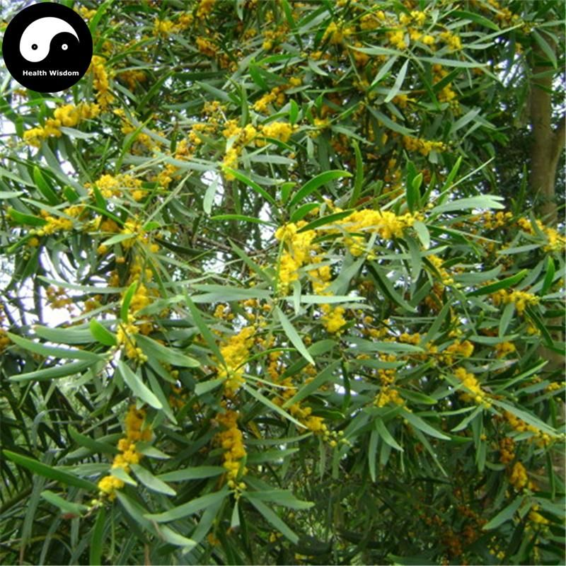Buy Acacia Confus Seeds 30pcs Plant Acacia Confus For Taiwan Xiang Si Shu Plants Cool Plants Seeds