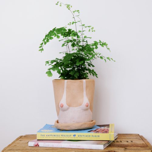 Potted plants by The Sill x Isaac Nichols. Photos by Sidney...