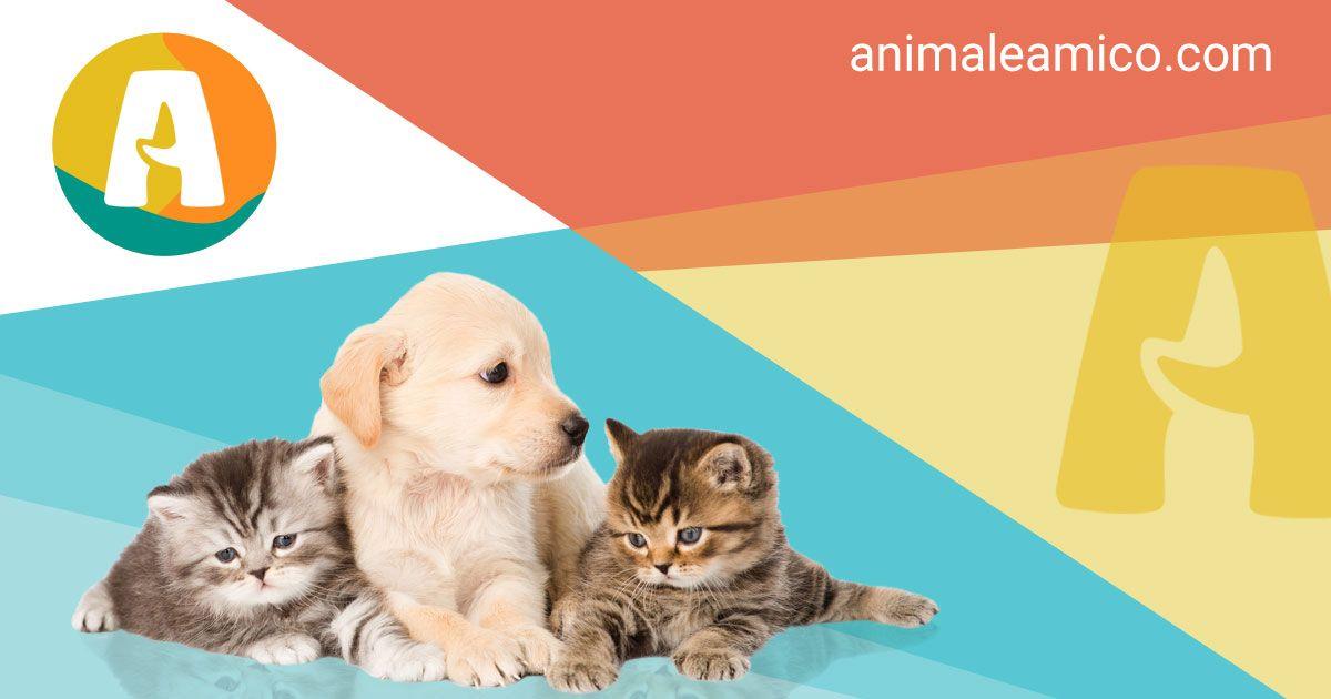 Subito Annunci Animali Di Cani In Regalo E Cuccioli Da Adottare