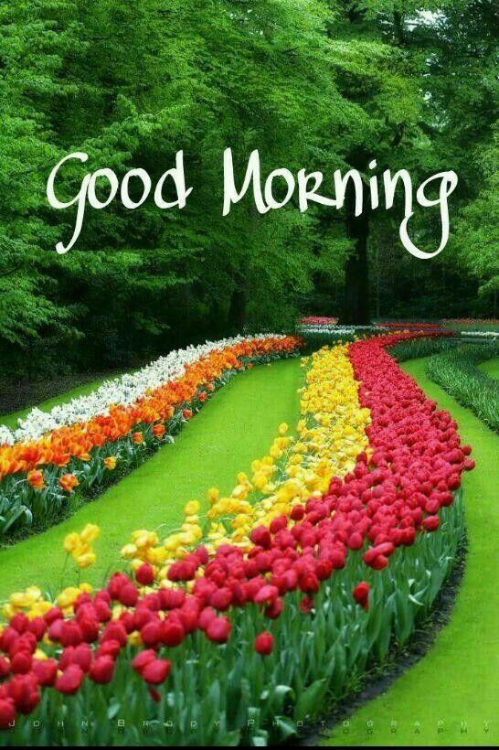 Good Morning Beautiful Gardens Beautiful Tree Tulips