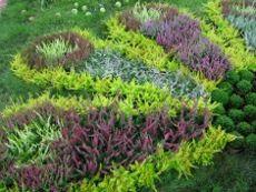 Wrzosowisko Zakladanie I Uprawa Ogrodnik Amator Amatorska Uprawa Ogrodu Plants