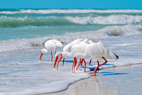 Dog Friendly Beaches In Marco Island Florida