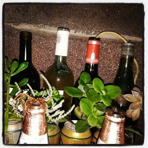 .....botellas floreciendo!!!