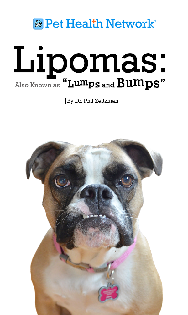 Lipomas Also Known As Lumps And Bumps By Dr Phil Zeltzman Canine Health Pet Health Pet Cancer
