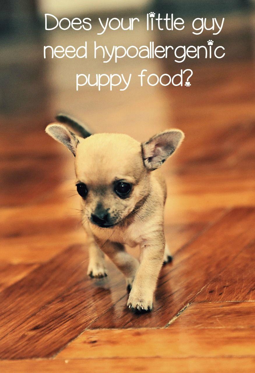 Hypoallergenic Puppy Food An Unfortunate Necessity