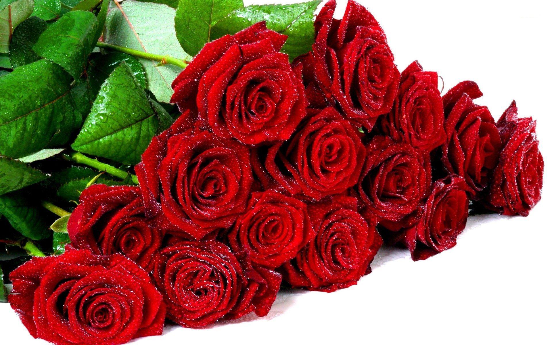 صور ورد طبيعي Most Beautiful Flowers Red Roses Wallpaper Rose Wallpaper