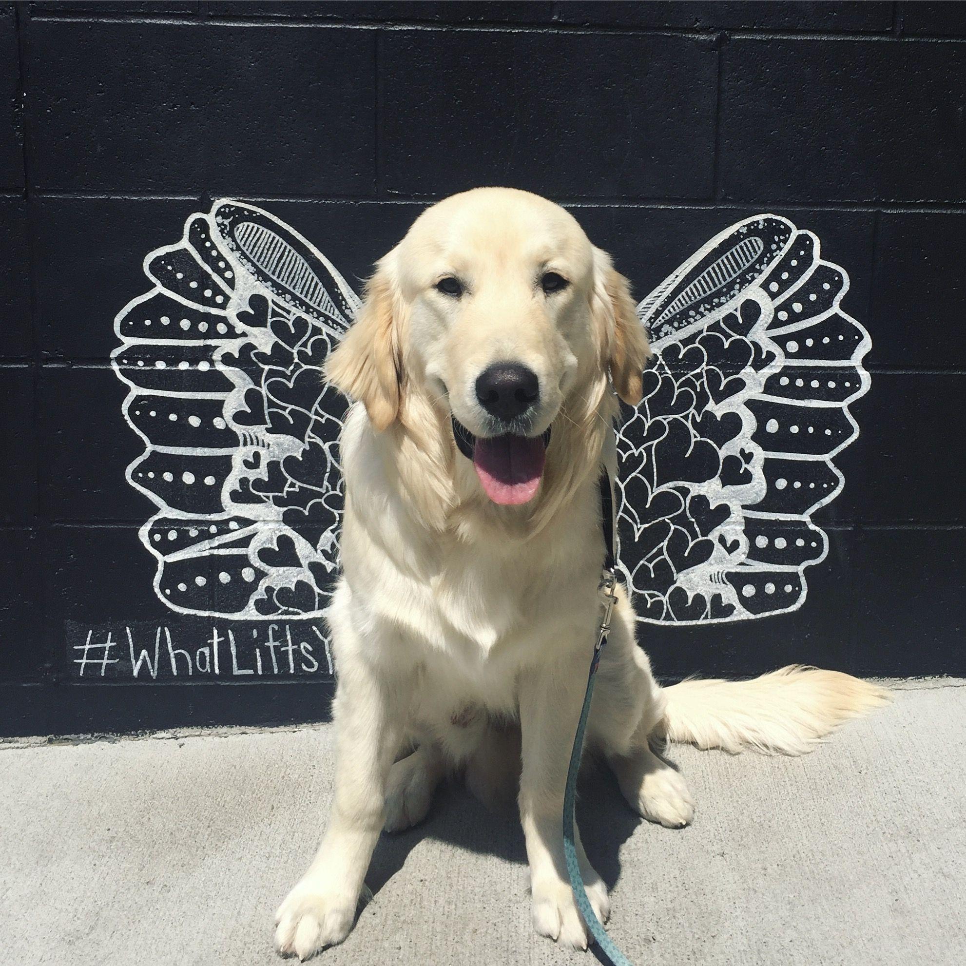 Golden Retriever Puppy Nashville Murals The Gulch What Lifts You Golden Retriever Dogs Golden Retriever Golden Retriever Puppy