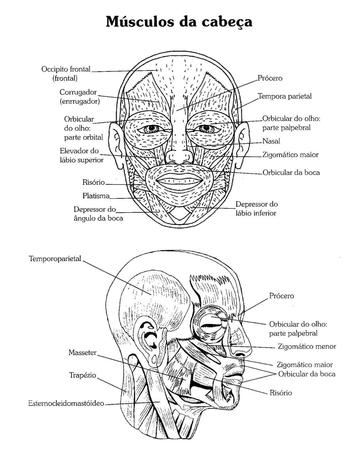 32 Desenhos De Anatomia Humana Para Colorir E Imprimir Em 2020