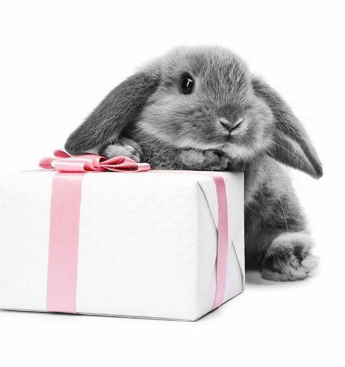 Видео открытка кролику, папоротник орляк микки