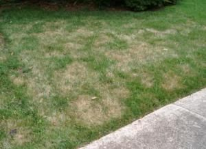 Why is my lawn brown lawn and lawn care how do you know if the brown spots in your lawn are caused by the heat publicscrutiny Image collections