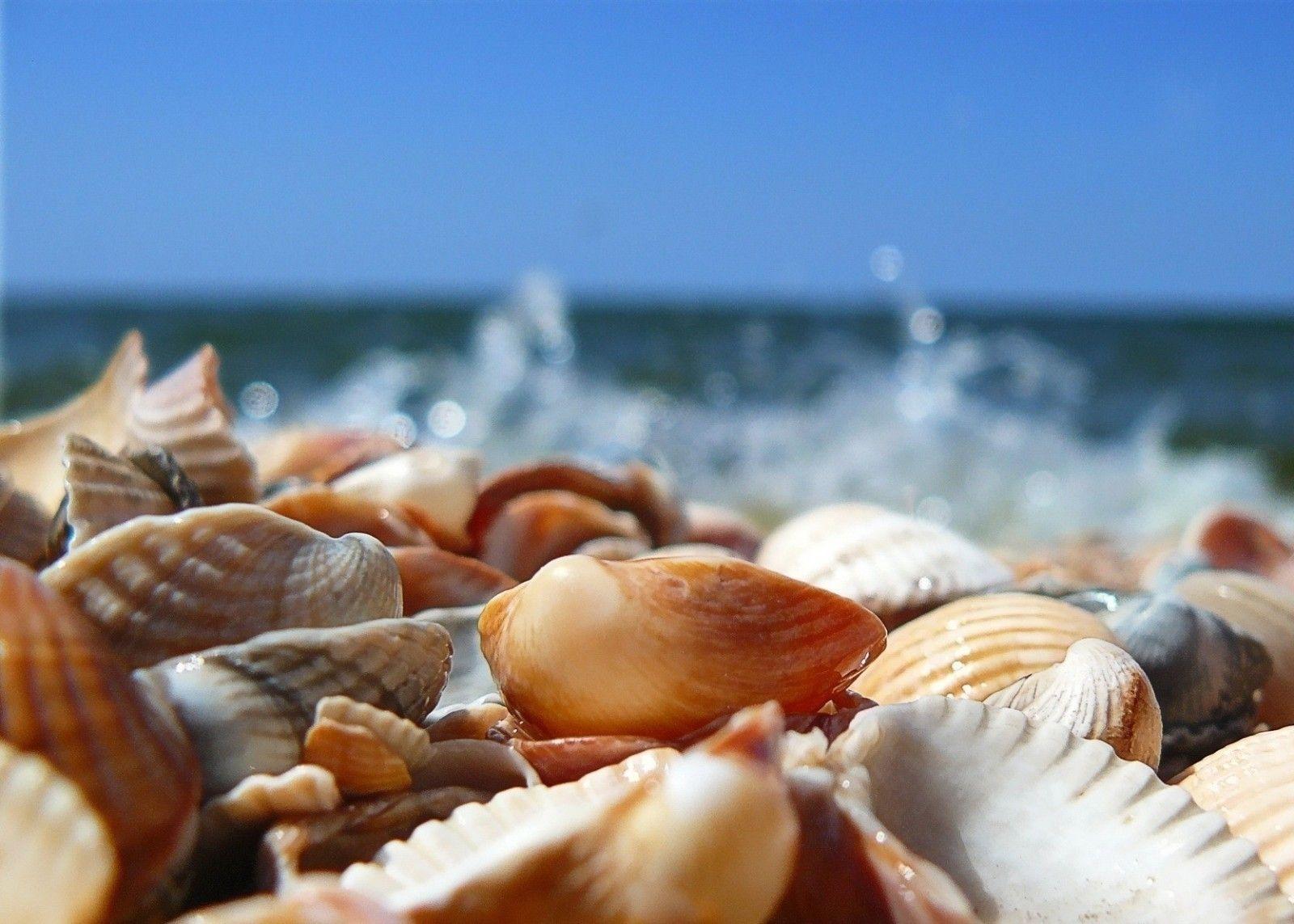 белые гиф ракушки море они