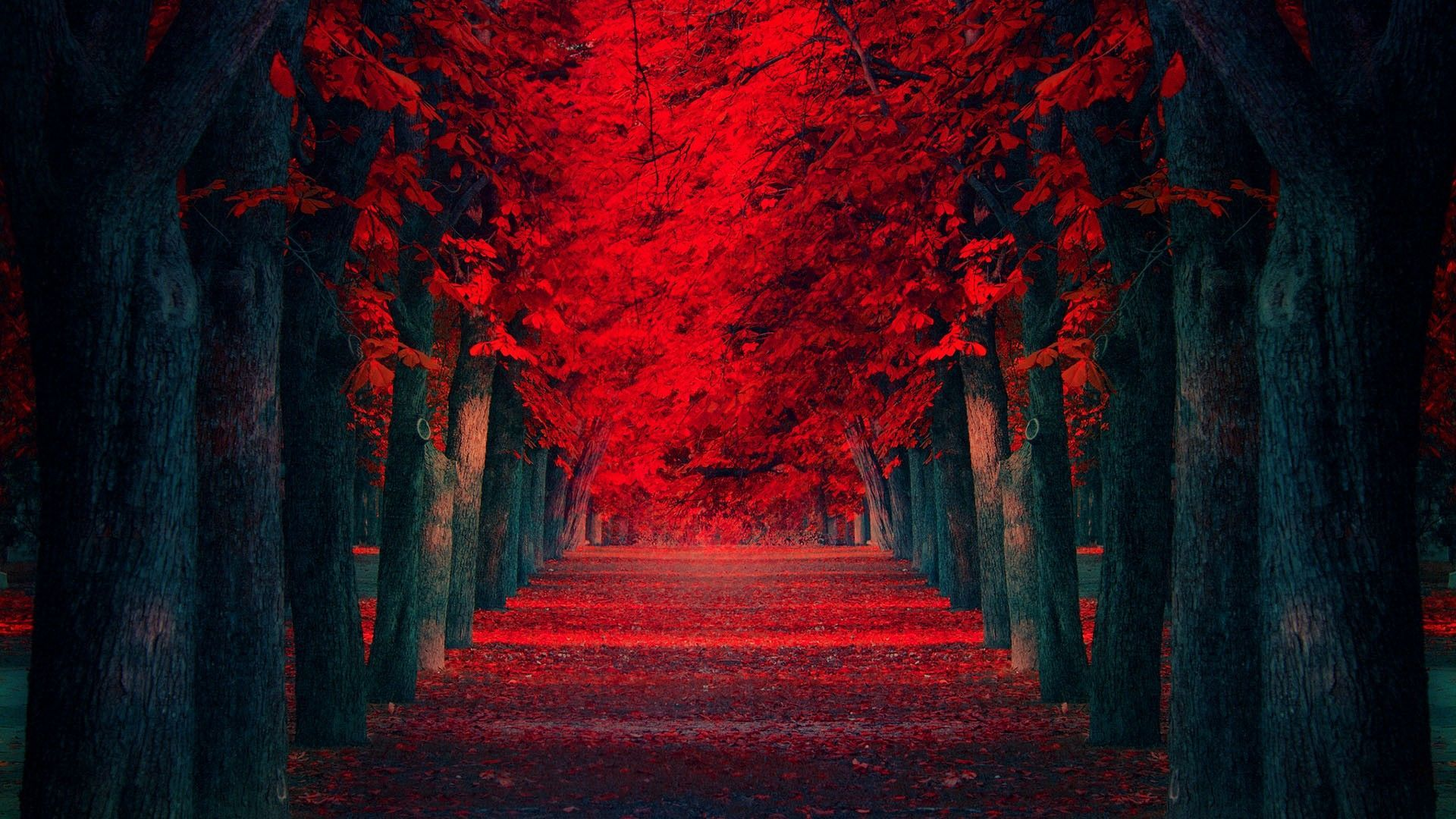 Blood Falling Wallpaper Pin By Andrew On Full Hd Wallpapers Red Maple Tree Red