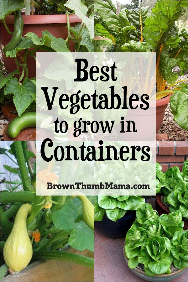 5 Best Container Vegetables for Beginning Gardeners