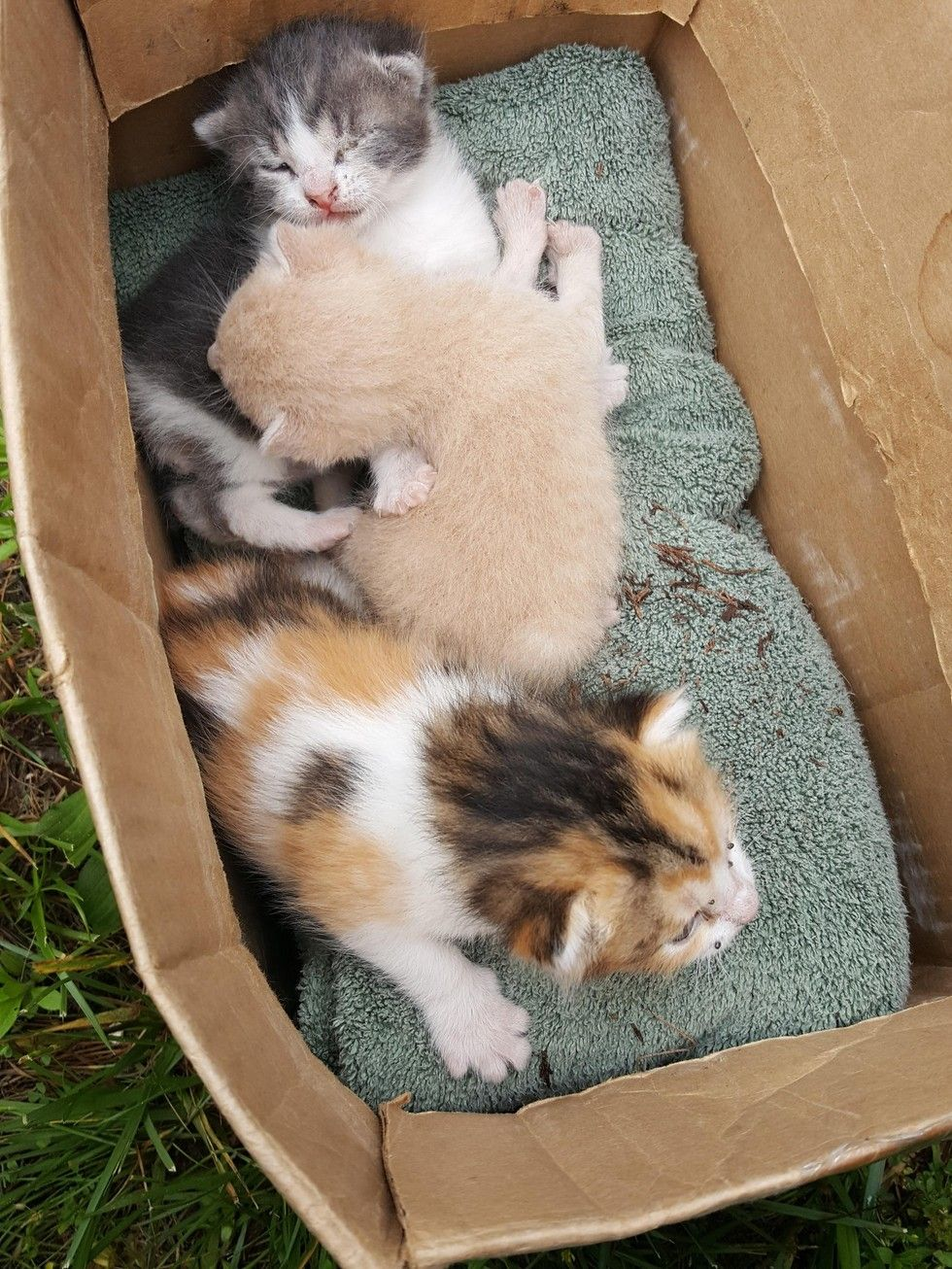 Family Heard Kitten Cries From Bush And Couldn T Believe What They Found Cute Cats And Dogs Kitten Dog Cat