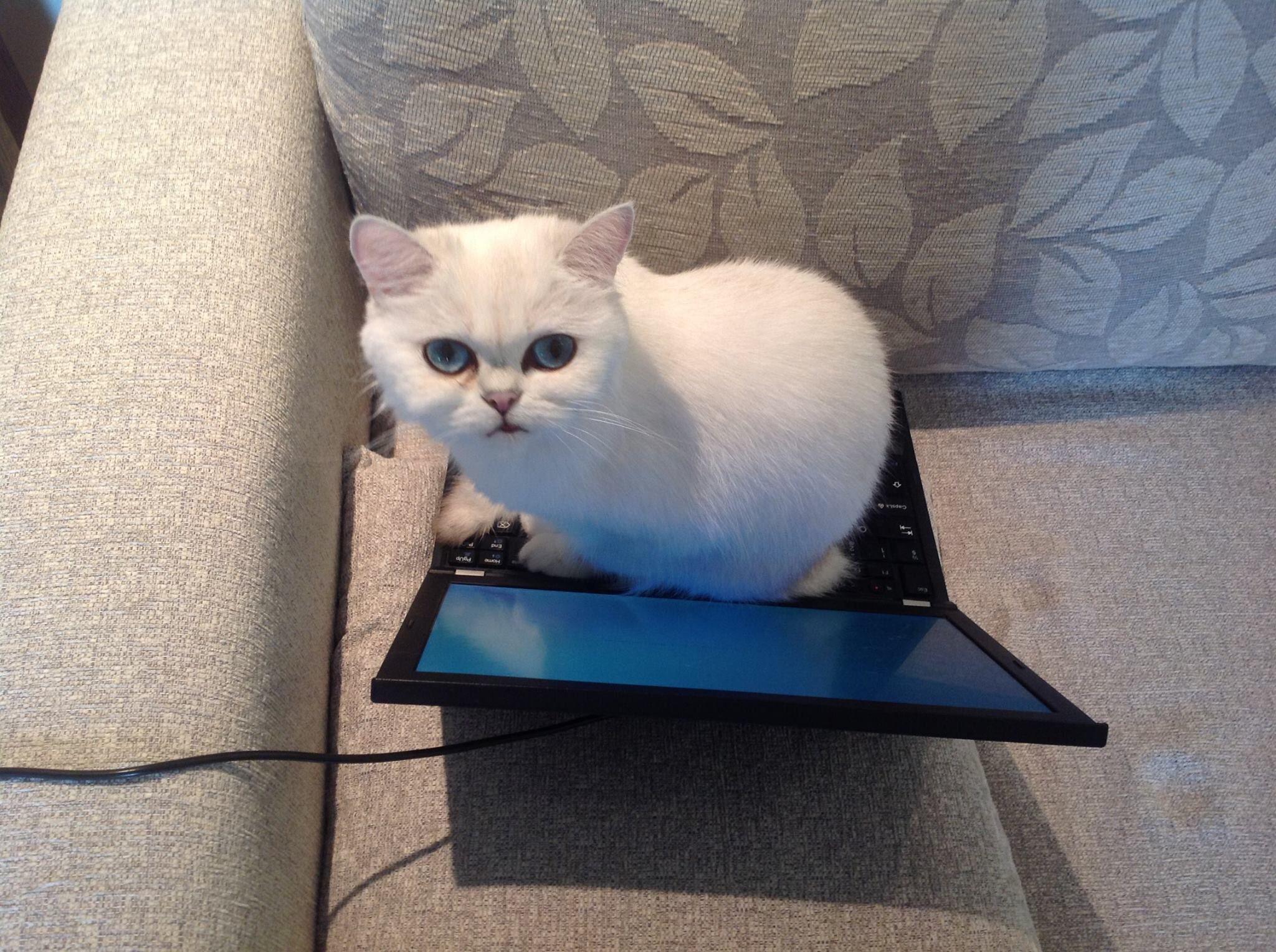 Kitty2222222