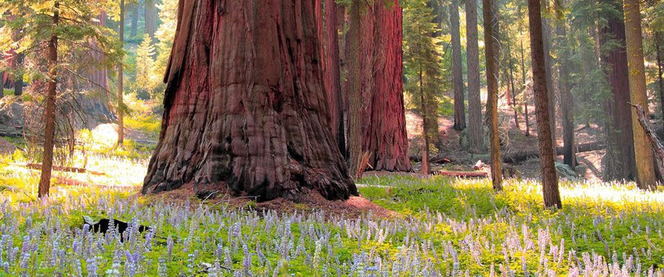 Sequoia - Gen. Sherman and Big Trees Trail