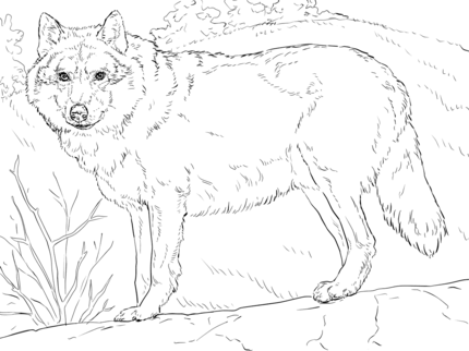 Grey wolf coloring page coloring for adults pinterest for Grey wolf coloring pages