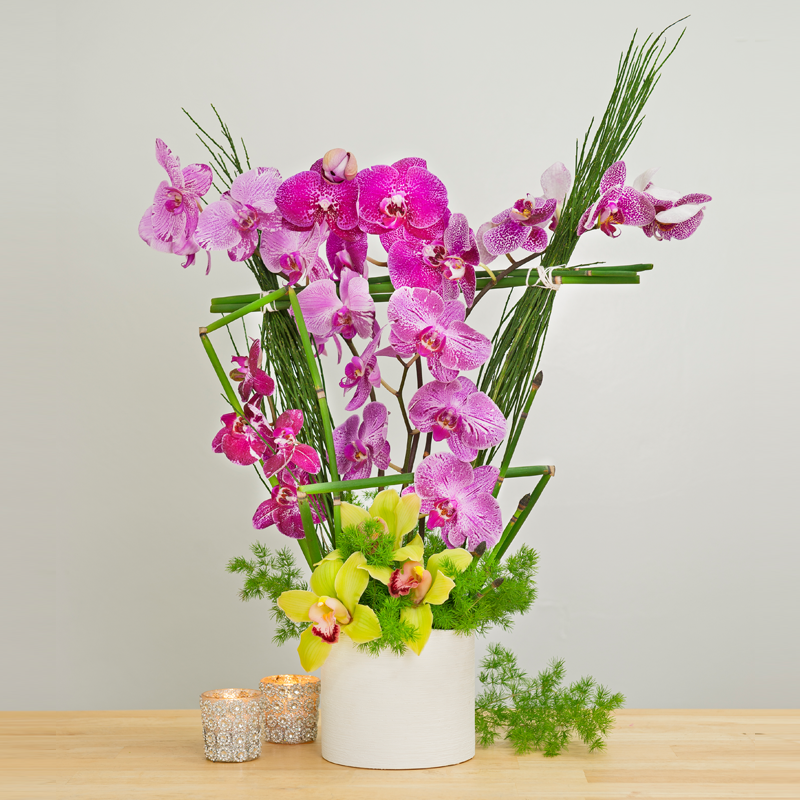 Orchid Frenzy by The Daily Blossom Florist Blossoms