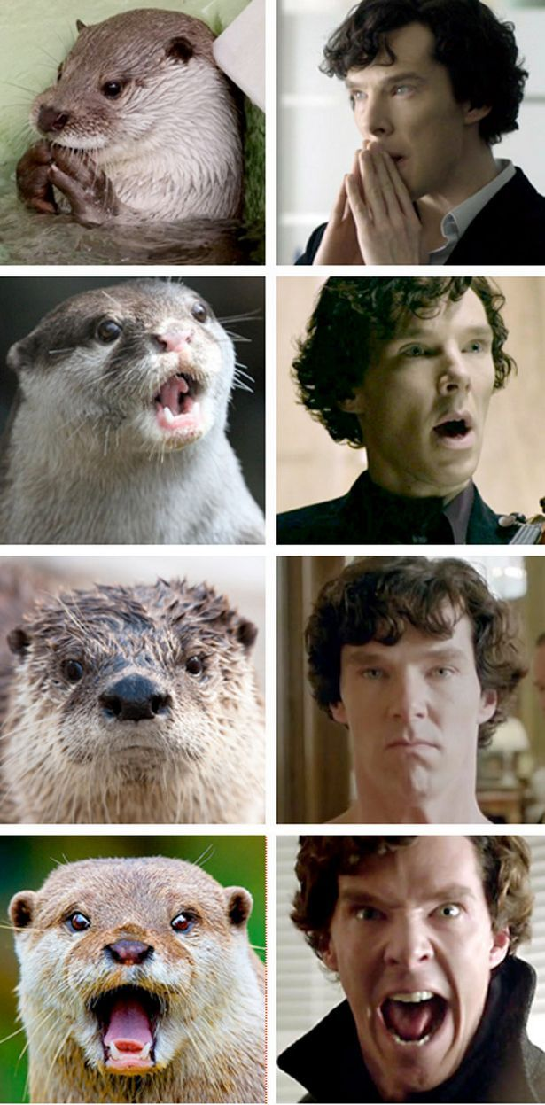 I actually think he has more of a reptilian face