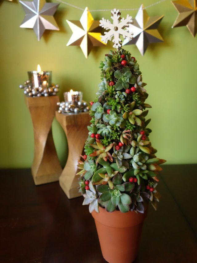 How To Make A Mini Succulent Living Christmas Tree Using En Wire Frame And Cuttings