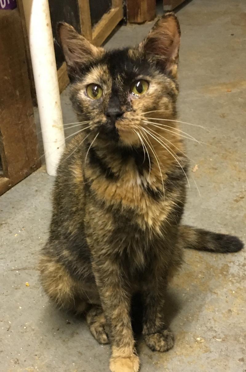 Adopt Nora on Adoption, Cats, Animals