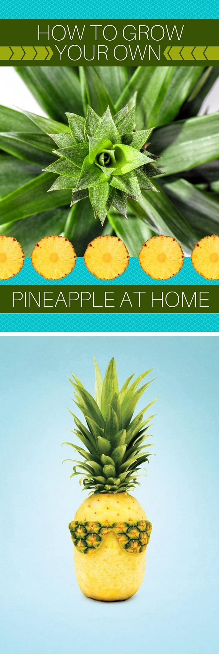 How To Grow Your Own Pineapple At Home | Natural Beauty ...