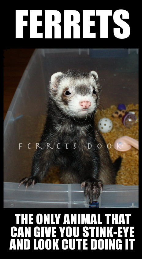 Handful Of Ferret Cute Ferrets Funny Ferrets