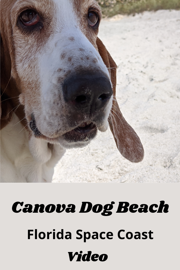 Canova Beach Fl In 2020 Florida East Coast Beaches Dog Friendly Beach Orlando Florida Beaches