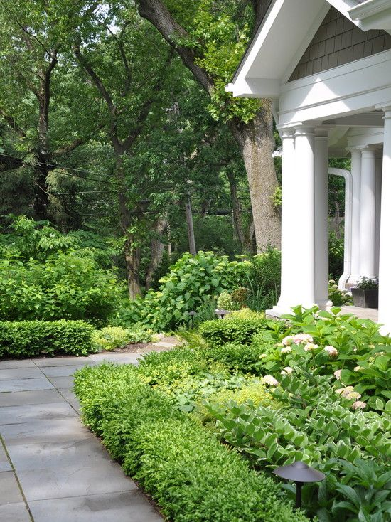 Boxwoods With Ferns Peonies And Hydrangeas Athens Home
