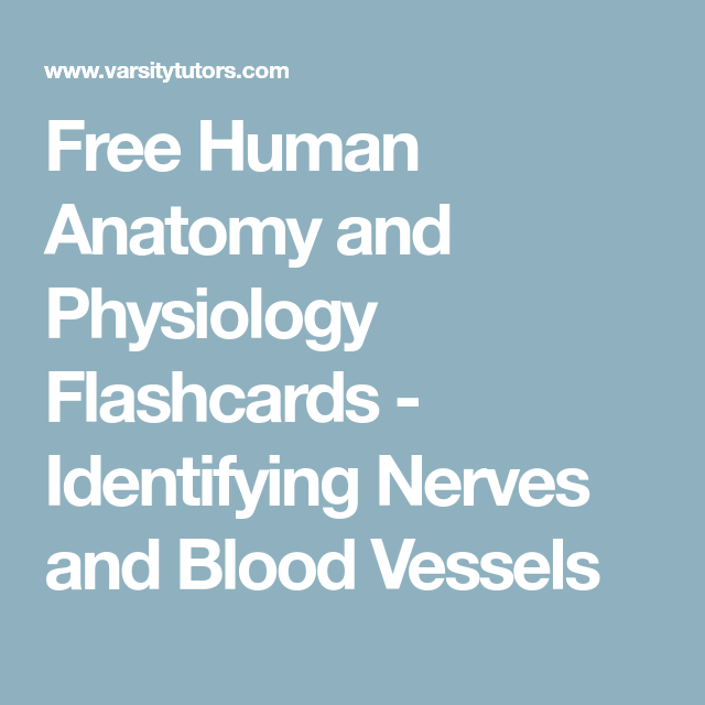 Free Human Anatomy and Physiology Flashcards - Identifying Nerves ...