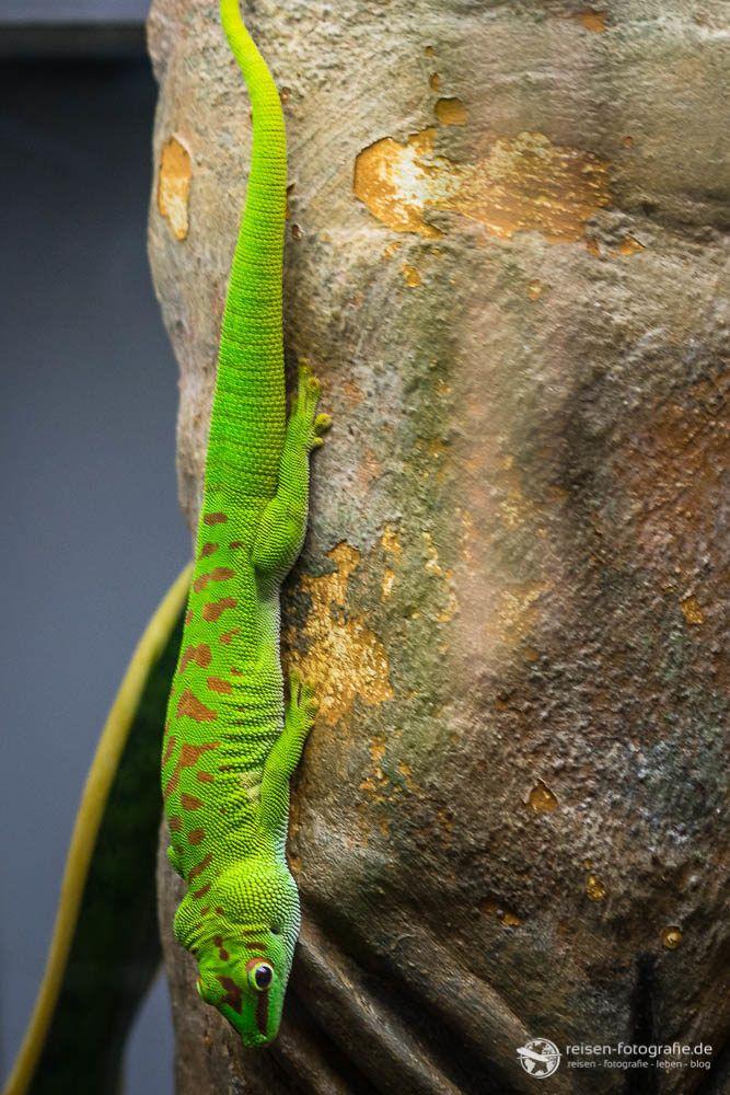 Wilhelma Erster Besuch Im Zoologisch Botanischen Garten Stuttgart Reptilien Natur Tiere Und Amphibien