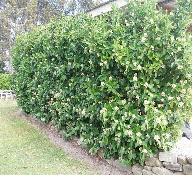 22 Incredible Budget Gardening Ideas: 40+ Beautiful Backyard Privacy Fence Landscaping Ideas On